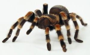 spider-hypnotherapy-300x184
